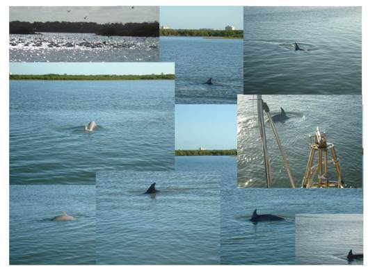 Dolphins_forBlog